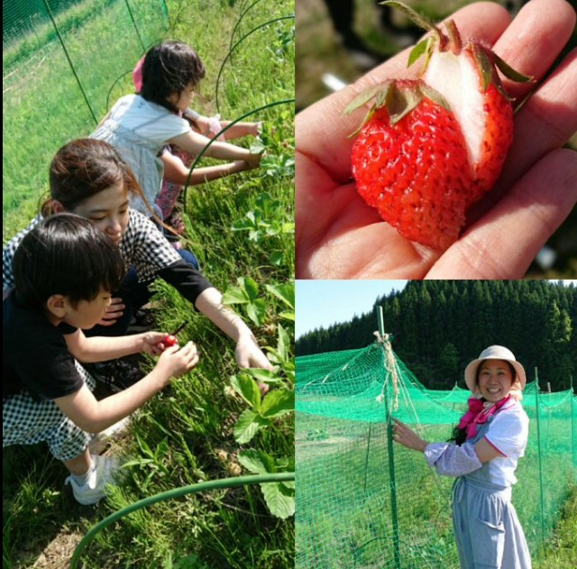 Drawing each Equipments of Strawberry Garden.