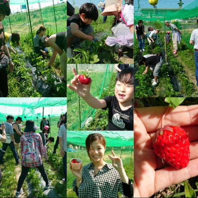 【G.W〜6月上旬】自然栽培のイチゴ摘みイベント開催!!