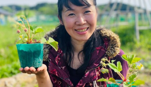自然栽培(無農薬)いちご苗のプレゼント企画