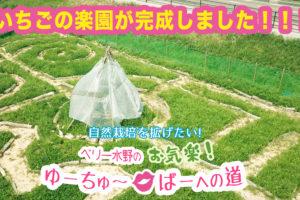 いちごの楽園完成!オープンまでカウントダウン入りました〜!!!